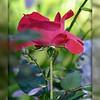 Happy Valentine's Day Everybody!!!<br /> <br /> Daily Photos  -  February 14, 2012