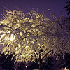 Snowy Tree<br /> <br /> Daily Photo - February 11, 2013