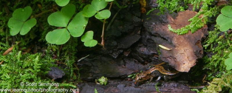 Salamander Hideout