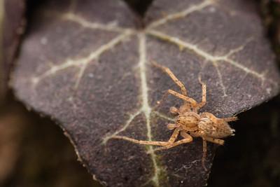 Ghost Spider