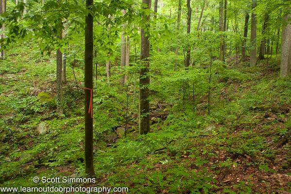 Trees at Monroe Run