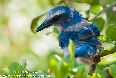 Jays & Crows