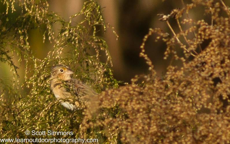Photo & Video Sharing by SmugMug