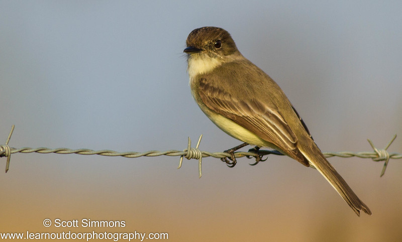Photo & Video Sharing by SmugMug