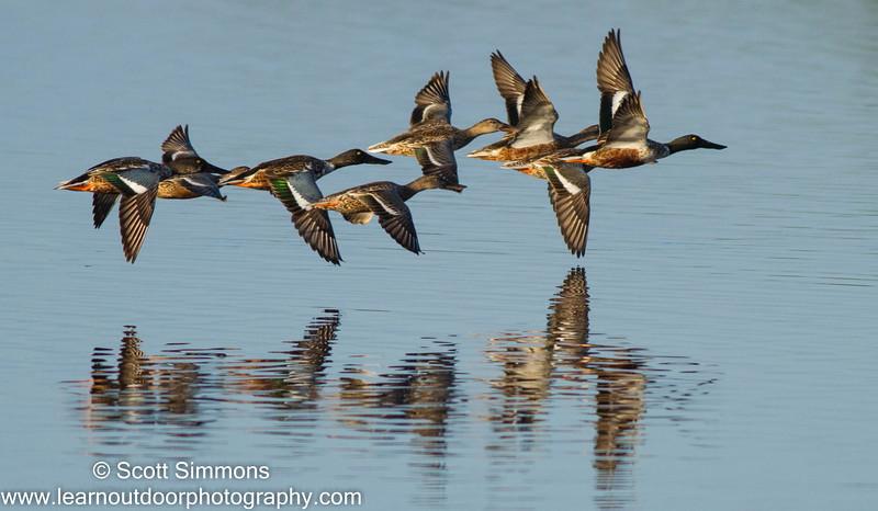 Merritt Island NWR, 12/31/2012