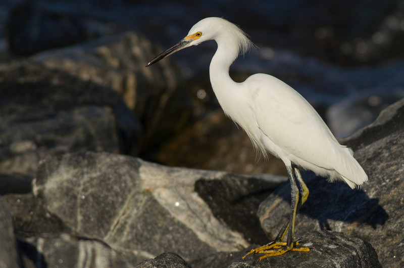 Exposure Compensation for Wildlife Photography