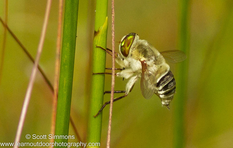 Other Flies