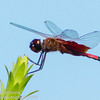 Carolina Saddlebags