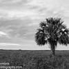 Palm on the Flats