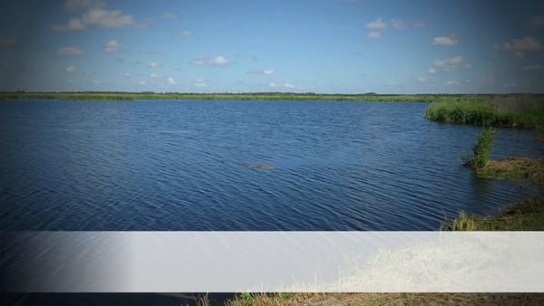 Wildlife of Lake Apopka