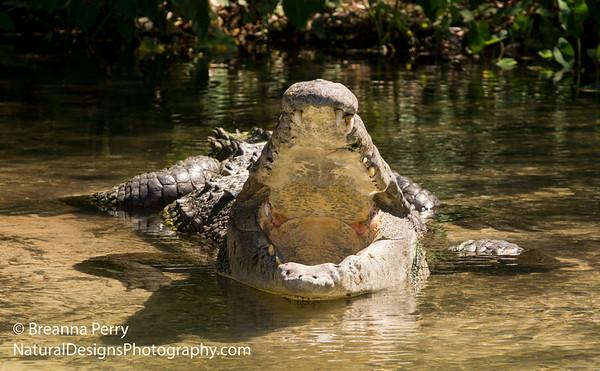 Reptile & Amphibian
