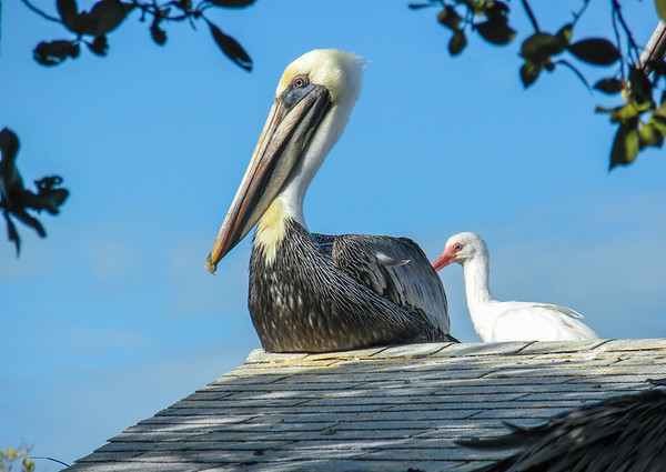 Bird Sanctuary - Key Largo