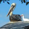Bird Sanctuary, Key Largo