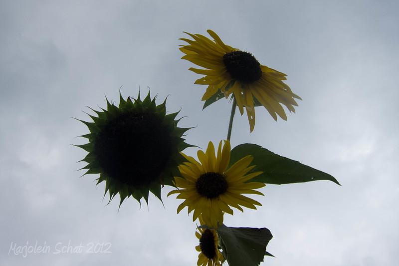 IMG_2012_09_08