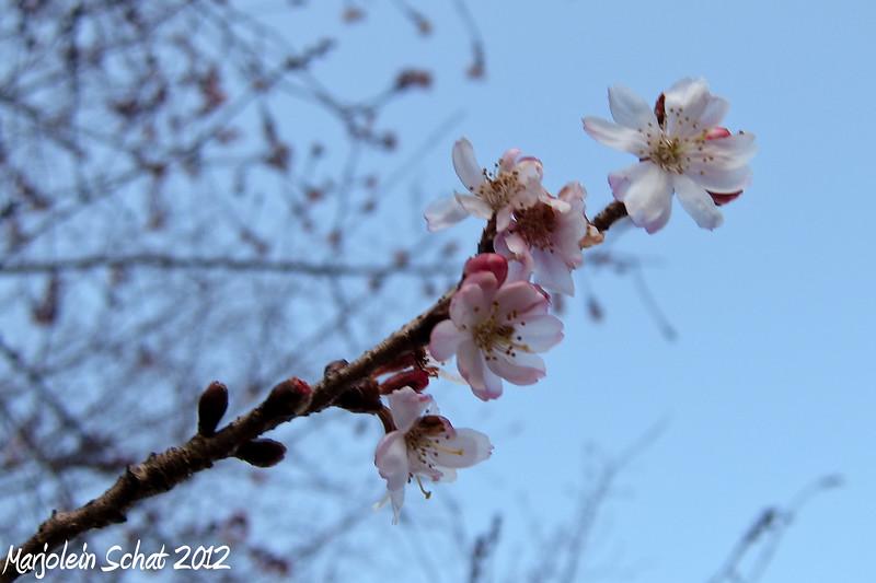 IMG_2012_02_09