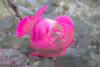 IMG_2012_11_04B