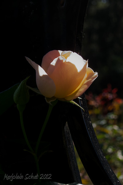 IMG_2012_10_14