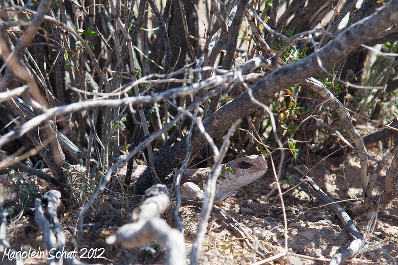 IMG_2012_2_26A