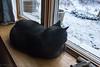 "2015-12-19: Not my cat enjoying some ""kitty TV"""
