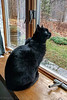 2015-12-31: #notmycat practicing his feeder counts ahead of the Ithaca Audubon Christmas (New Years) Bird Count.