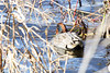 2015-11-22: Spur of the moment trip to Montezuma yield a bunch of photos of a fly flock of green-winged teal.