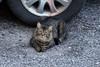 2016-08-23: Another neighborhood kitty