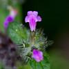2016-09-03: Fuzzy flowers