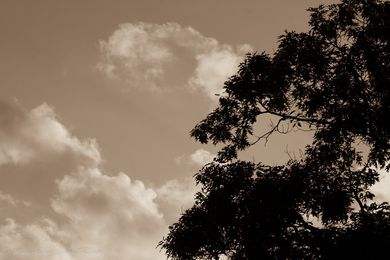 2016-08-26: Monochrome sky