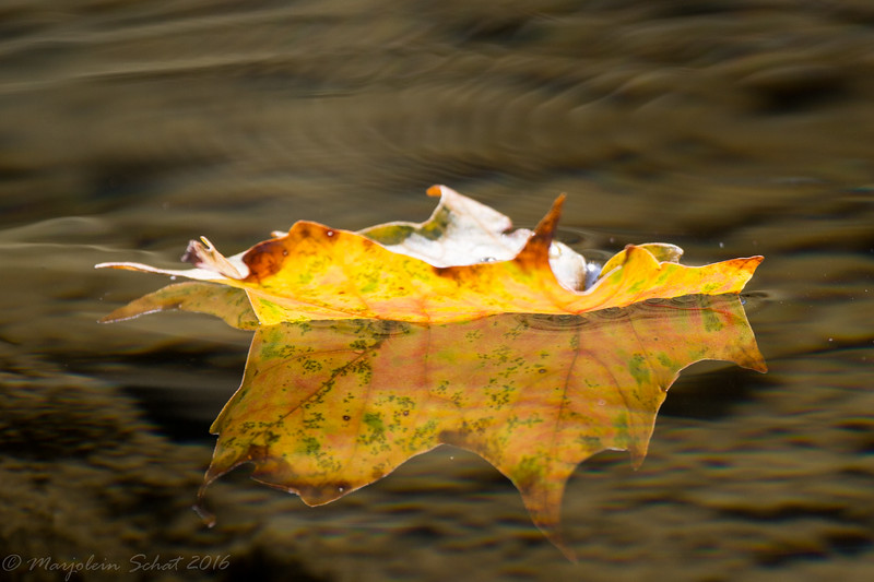 2016-08-28: Some leaves are already turning