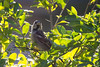 2016-09-12: Curious house sparrow