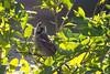 2016-09-12: Curious house sparrow