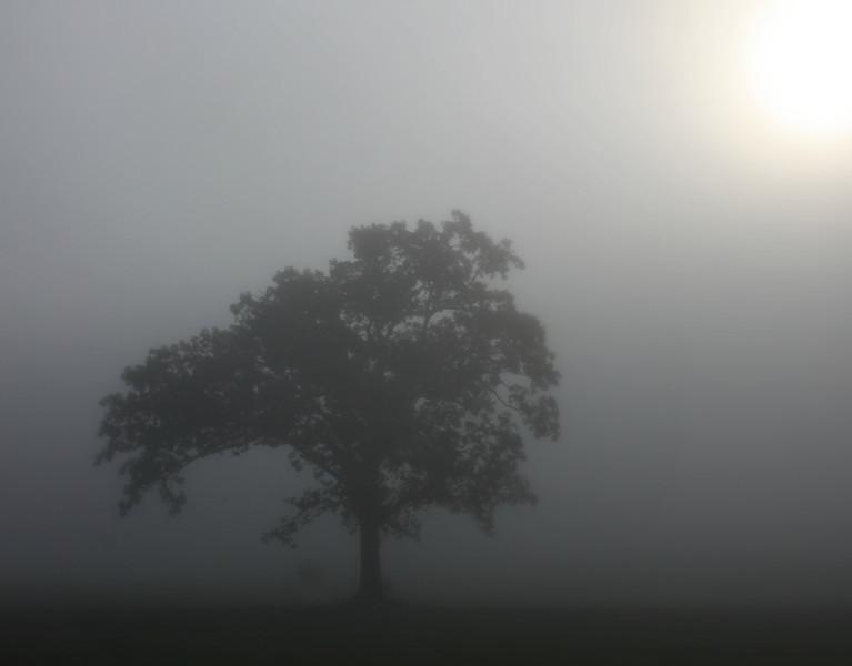 As the sun try's to break through on a foggy crisp morning.....
