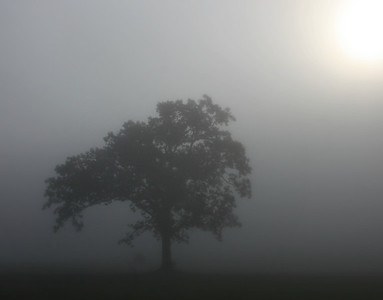 As the sun try's to break through on a foggy crisp morning.....