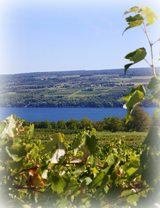 A shot through the grape vineyards looking down over beautiful Senaca lake. The Finger lake region in New York State produces some of the best wines in the world I am lucky enough to live in this area. and enjoy all it's beauty... Have a great day everyone....
