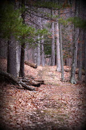 A shot from a walk I took yesterday. These woods are a very calming place so quiet.. Enjoy your day...