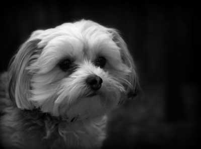 The past few days I have been dog watching my daughters dog Gracie yesterday we took a walk and took the camera along I found out she is a real ham and I think she enjoyed our little photo shoot.. Hope everyone has a great day.....