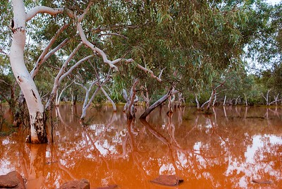 Fortescue River in Flood, Pilbara, WA