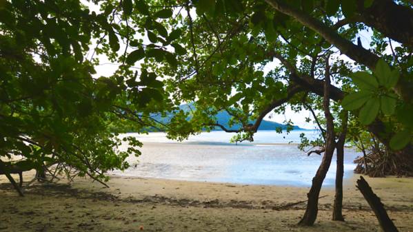 Cape Tribulation, Queensland