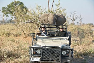Elephant charge-5- 7-14-13