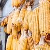 hanging drying corncobs (shallow depth of field)