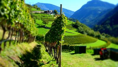 "Dalla Terra ""Giro d'Italia"" September 2015"