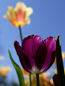 This photo won 1st place in the Up Close Flora division of the 2009 Texas State Fair.