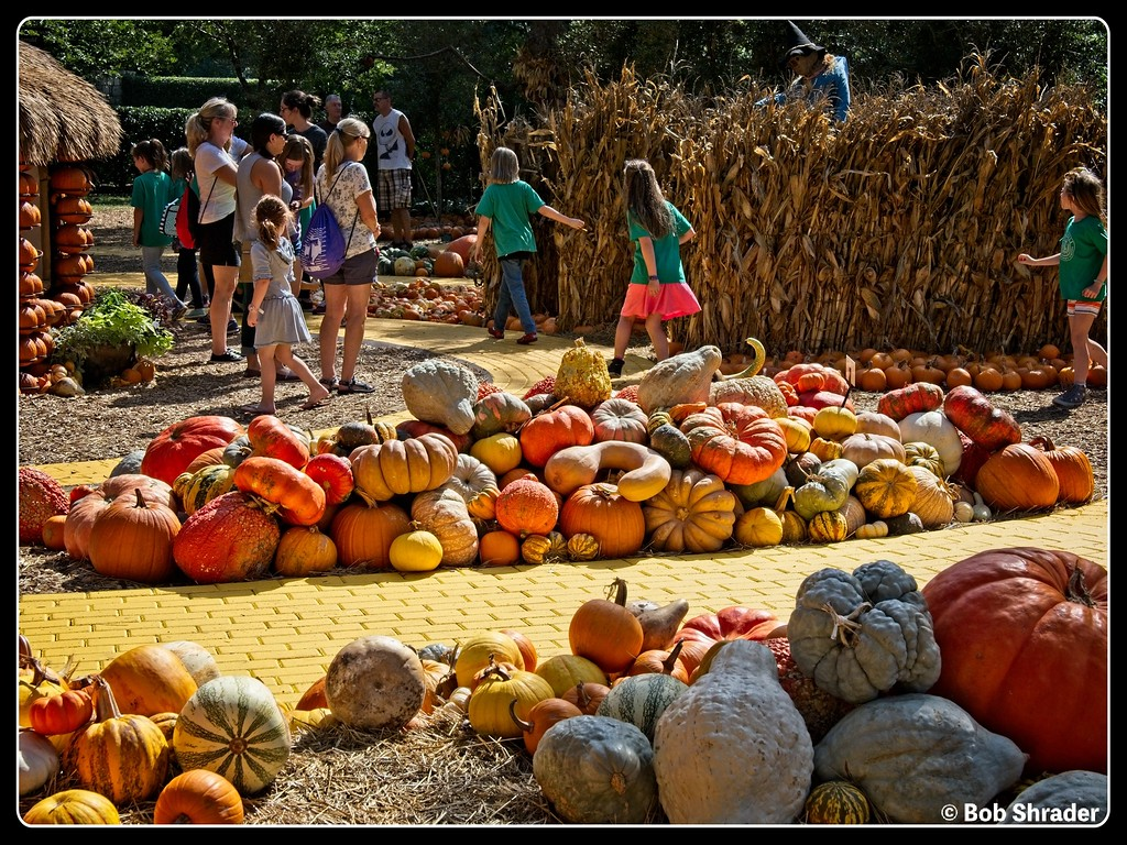 Pumpkin Village