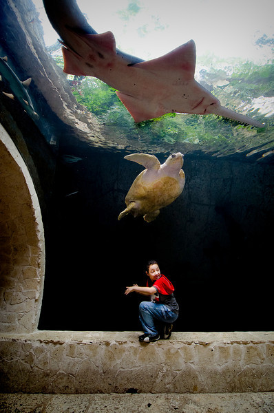 Dallas World Aquarium, 2 May 2012.