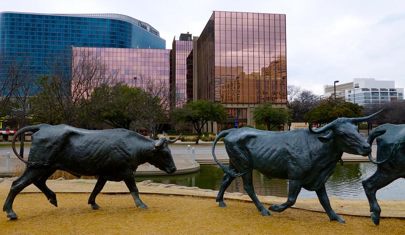 A tuto to je! Na Námestí zakladeteľov (Founder's Place) sa po tráve preháňa vyše 35 takýchto bronzových býkov a poháňa ich viacero kovbojov.