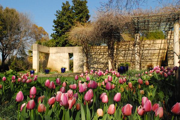 The Arboretum March 7