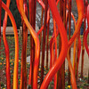 Chihuly '12 -  107