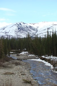 Gold Creek at MP197, looking upstream.