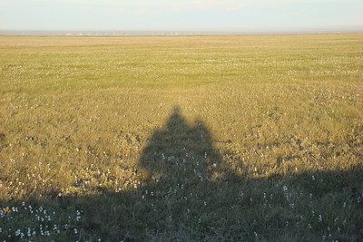 July 4, 2008 11:40 PM - Just a few more miles to Deadhorse, with the sun shining brightly out of a clear, blue sky, rider and bike cast a shadow across the arctic plain tundra and a sparse scattering of Alaska Cotton.