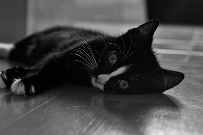 Dalton, chilling after play (b/w)